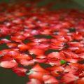 バンヤンツリー・バンコク フラワーバスで酒とバラの夜