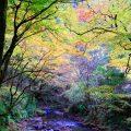 2018年 佐野市 蓬莱山に紅葉狩り