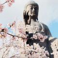 2019年 大仏、桜、芝桜 牛久大仏再び(泉美 咲月の死ぬまでに拝みたい世界の巨大神仏像めぐり)
